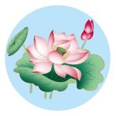 6:关于莲子的知识